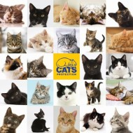 Puzzle  Otter-House-Puzzle-73565 Cats Protection
