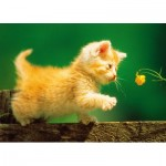 Puzzle  Step-Puzzle-77010-08 Chaton